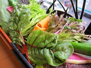 くるむサンパ店の野菜、色が鮮やか過ぎ!