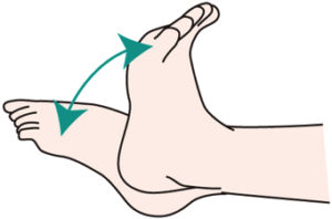 足首を動かすとリンパの流れがスムーズになって肉割れ予防になるよ