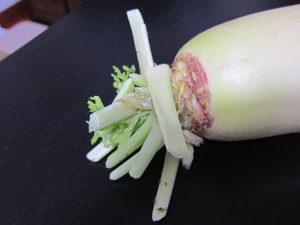 お店で買う大根って葉っぱはこれくらいしかないケド。これでもお味噌汁の具になるよ。