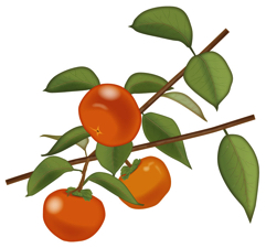 柿の葉寿司ってのもあるもんね。葉っぱにも栄養がたくさん入ってるんだ