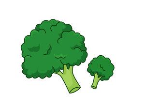 ブロッコリーの茎は甘みが強いよ〜
